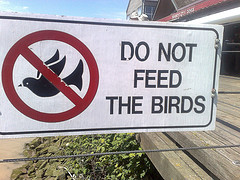 "sign ""do not feed the birds"" with flying bird in a null symbol"